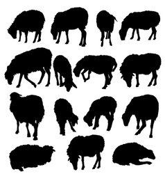 Sheep Lamb Set vector image