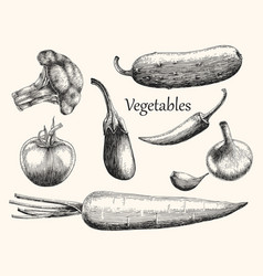 Vegetables hand drawing engraving style vector