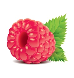 object raspberry vector image vector image