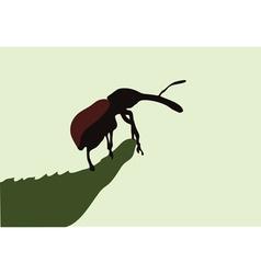 Beetle on leaf vector