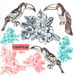 Collection of three toucan bird fully hand drawn vector