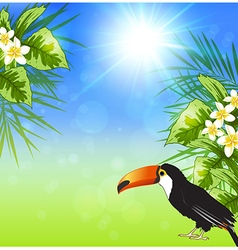 Green tropical leaves and toucan vector image