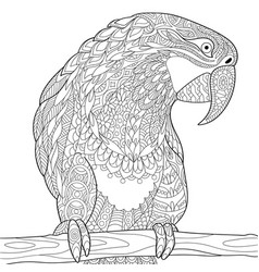 macaw parrot coloring page vector image