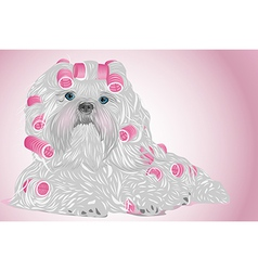 Shih tzu female dog vector