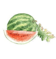 Vegetable vitamin painting watercolor vector