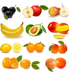 group with sorts of fruit vector image vector image