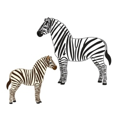 Two zebras vector image vector image