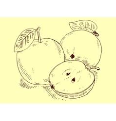Apple sketch vector