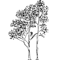 Birch Tree Silhouette vector