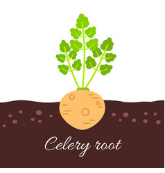 Celery root icon with title vector