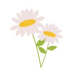 Daisy flowers petals stem leaf nature decoration vector