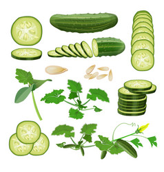 Fresh cucumber set in realistic style vector