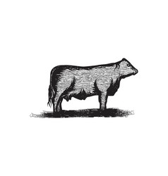 hand drawn beef cattle logo designs inspiration vector image