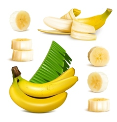 Ripe yellow banana vector