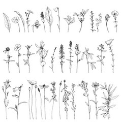 Set ink drawing herbs and flowers vector