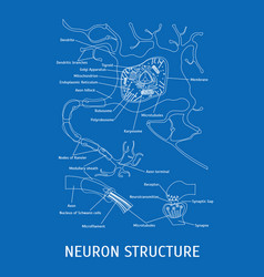 Structure of a neuron vector