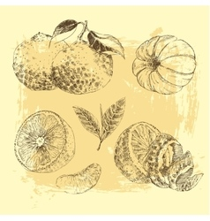 Vintage Ink hand drawn collection of citrus fruits vector image