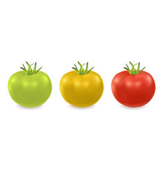 3d realistic green yellow and red tomato vector image vector image