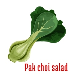 Bok choy or chinese cabbage vegetable icon vector