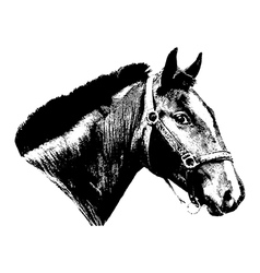 Engraved vintage horse head vector