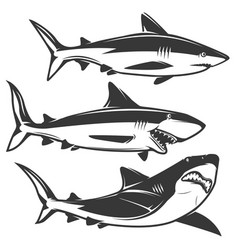 Set of shark icons isolated on white background vector