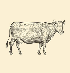 cow hand drawn sketch vintage vector image