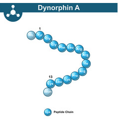 Dynorphin a abstract model amino acid sequence vector
