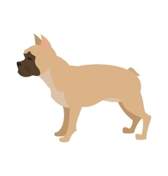 French bulldog design flat vector image