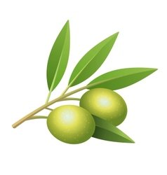 Isolated olives branch vector image vector image