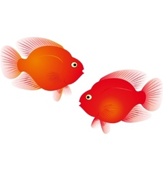 parrot fish vector image vector image