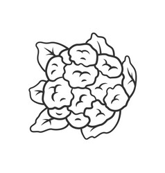 Cauliflower linear icon vector