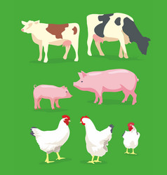 cow pig and chicken on green background vector image