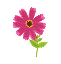 Drawing pink cosmos flower spring icon vector