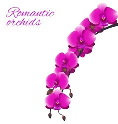 Pink orchid vector