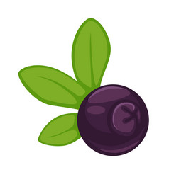 blueberry dark purple fruit with green leaves vector image vector image