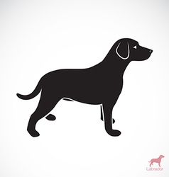 Dog Labrador vector image vector image