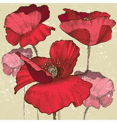 poppy flowers vector image vector image