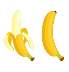 Yellow banana on a white background vector image