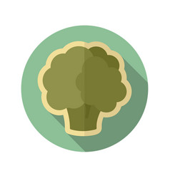 cauliflower flat icon vegetable vector image