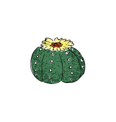 colored cactus hand drawn vector image