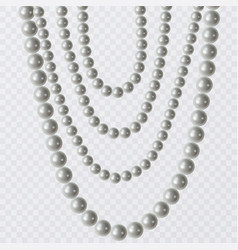 realistic strands of white pearls decorative vector image