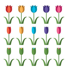 set colorful tulip icons vector image