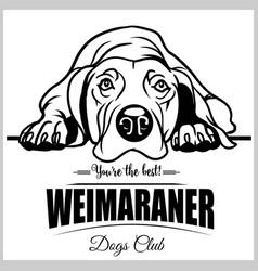 Weimaraner - for t-shirt logo vector