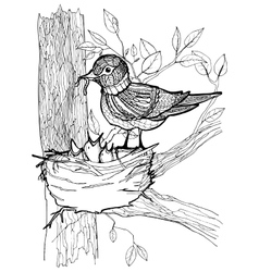Coloring page with birds vector image