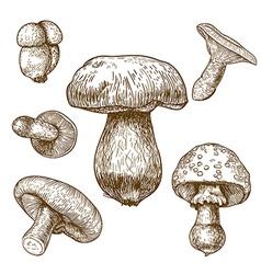 Engraving mushrooms vector