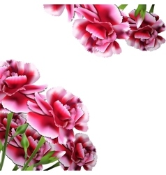 Floral Bouquet Carnation Greeting Card vector image