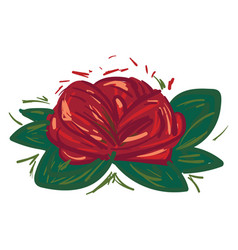 rose flower with green leaves or color vector image