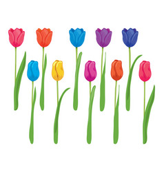 set colorful tulips vector image
