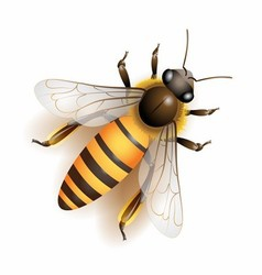 bee download colorful vector image