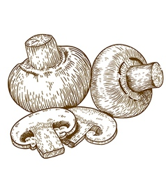 Engraving champignons vector